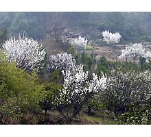 Early Spring rural China Photographic Print