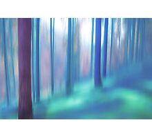 forest impressions V Photographic Print