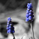 Little Purples by Jennifer Potter