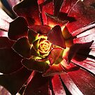 California Flowers by Sparc_ eg