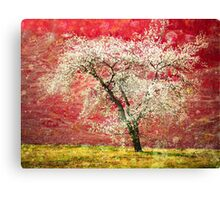 The First Blossoms Canvas Print