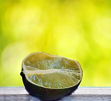 Lime by carlosporto