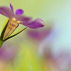 Lobelia Blossom by T.J. Martin