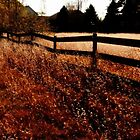 Farm Fence in Fall by mooselandtours