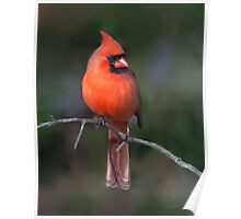 Northern Cardinal, Painted Poster