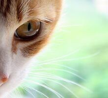 Golden Whiskers by meowiyer