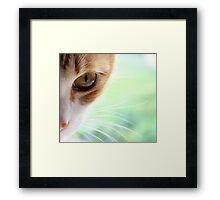 Golden Whiskers Framed Print
