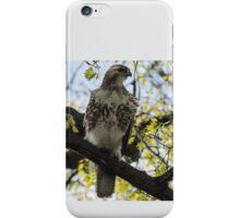 Red Tail Hawk Statue iPhone Case/Skin