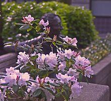 April Showers Bring Spring Flowers by Carlanne McCrystal