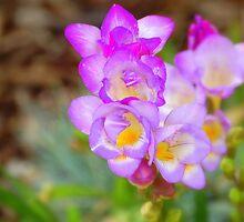 Sweetness of Violet: by Cherubtree