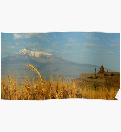 Wheat fields of Khor Virap Poster