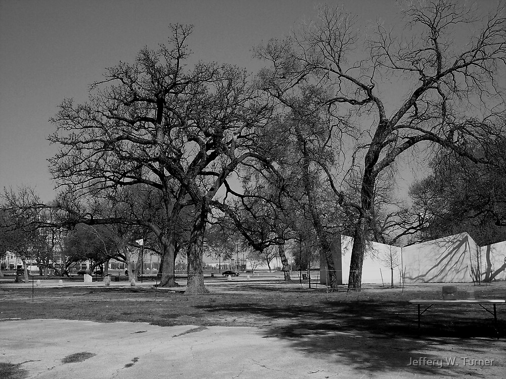Some Big Old Trees In A Park by Jeffery W. Turner