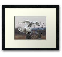 Energy Release/Snowy Owl Framed Print
