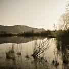 Evening Pond by Jessica Hardin
