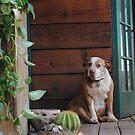 Haley On The Porch by NancyC