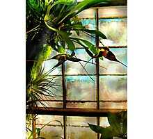 Hanging Out Orchid Style Photographic Print