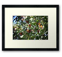 A cluster of colour. Framed Print