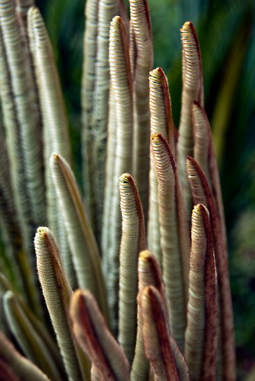 Cycad Fingers by Kasia-D