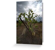Old vine  Greeting Card