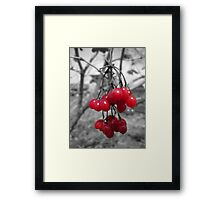 Red Clump of Berries Framed Print