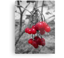 Red Clump of Berries Metal Print