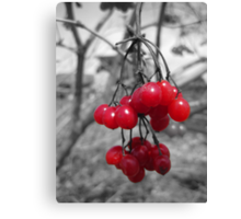 Red Clump of Berries Canvas Print