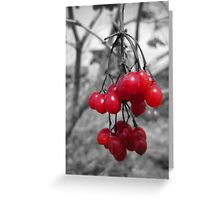 Red Clump of Berries Greeting Card