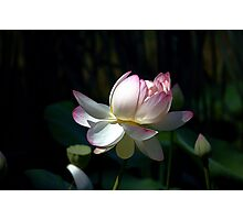 Lotus 1 Photographic Print