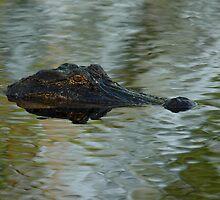 Gator Eye by msm62166