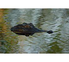 Gator Eye Photographic Print