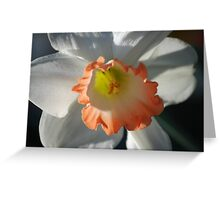 Tie dyed daffy Greeting Card