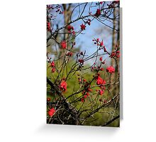 Lovely Limbs Greeting Card