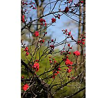 Lovely Limbs Photographic Print