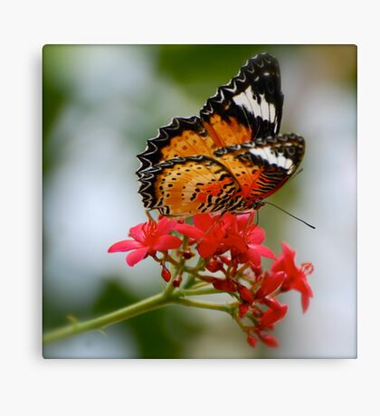 Lacewing Canvas Print
