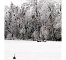 The Frigid Goose by ltlmschrisss
