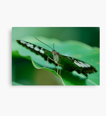 Ready For Take Off Canvas Print