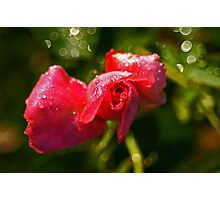 Sheer Beauty Photographic Print