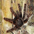 Peruvian Rainforest: Pink-Toed Tarantula by tpfmiller