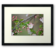 Countryside rambling in Springtime Framed Print