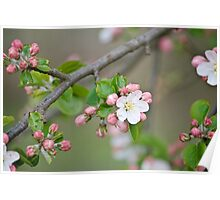 Countryside rambling in Springtime Poster