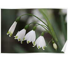 Snowdrops in a Row Poster