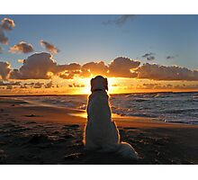 My Golden Retriever enjoys a beautiful sunset Photographic Print