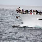 Galapagos Islands: Dolphins Following a Yacht by tpfmiller
