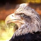 Eagle Profile by George Lenz