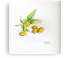 Kumquats Canvas Print