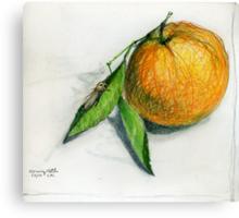 Morning Moth Canvas Print