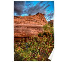 Blooming Rock Poster