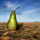 Pear & Tussocks by Þórdis B.