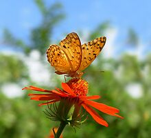 Butterfly on flower by anoopjoysury