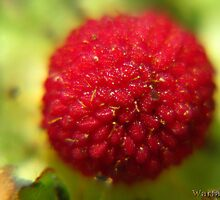 Wild Strawberry by WarfareFX